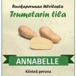 annabelle_peruna_Trumetarin_tila