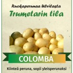 colomba_peruna_Trumetarin_tila