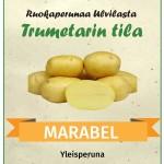 marabel_peruna_Trumetarin_tila